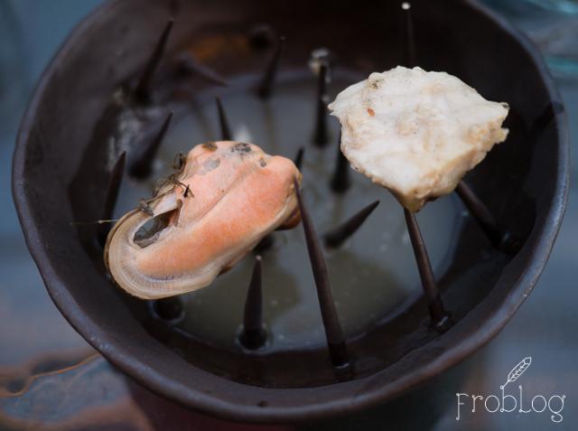 Food Think Tank Jesiotr ze stawów milickich Wędzony małż Esencja  jeziora